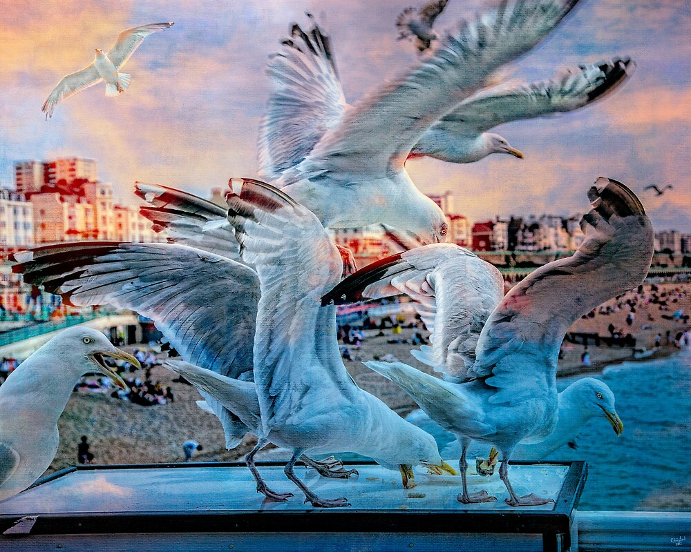 Seagulls on Brighton Pier by Chris Lord