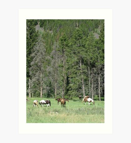 PACK STRING HORSES ON MAIN BOULDER CANYON ROAD Art Print