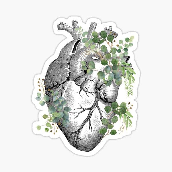 Eucaliptus leaves Heart Human Anatomy Sticker