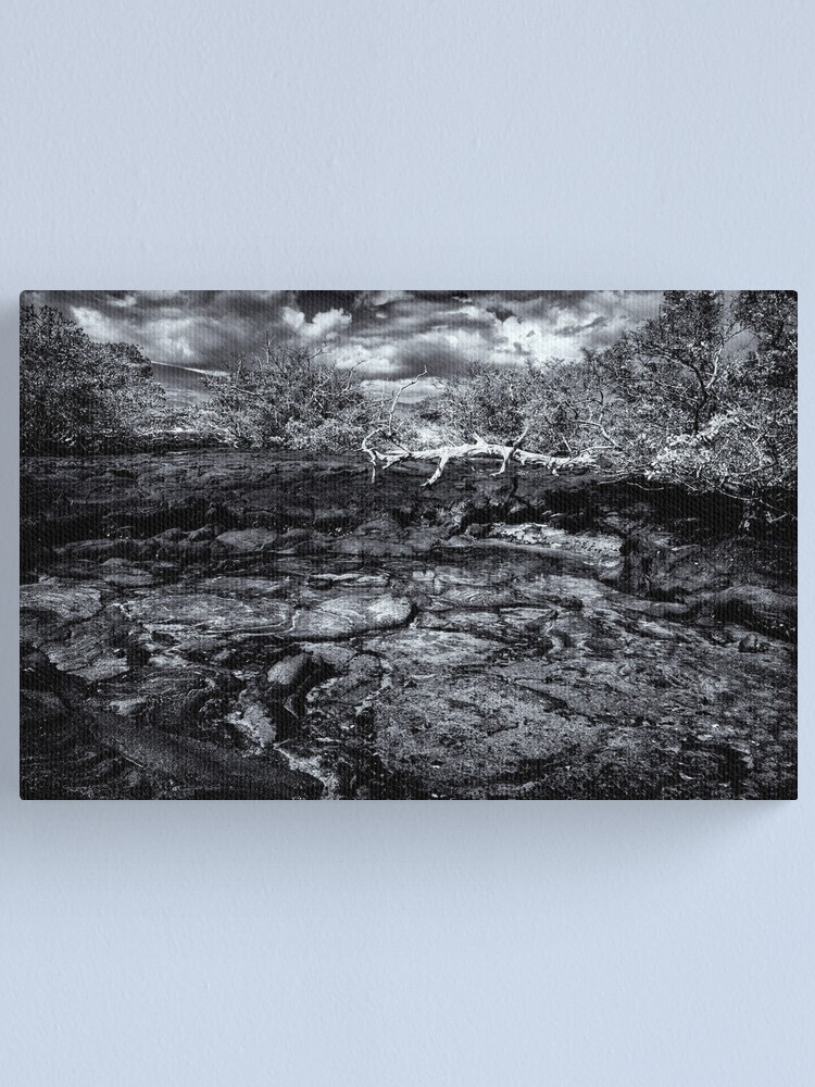Alternate view of Time In Galapagos Canvas Print