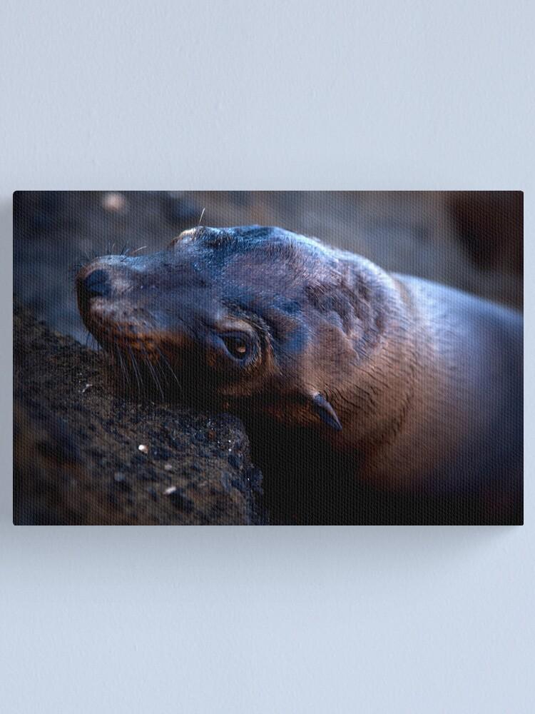 Alternate view of Galapagos Sea Lion Canvas Print
