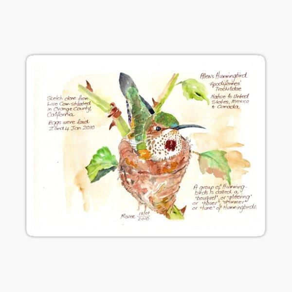 Phoebe, the Allen's Hummingbird - Botanical Illustration Sticker