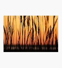 Cupsogue Reeds Photographic Print