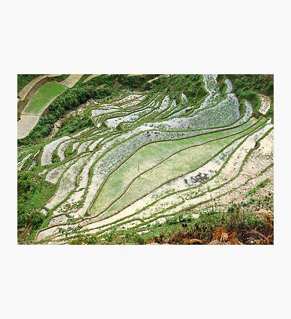 Rice Patterns Photographic Print