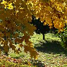 A window into the autumn sunlight by Fraizkonzept