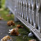 Wilted camellias in a bench by Fraizkonzept