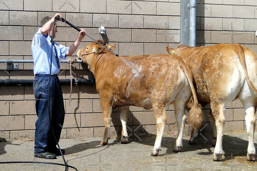 Working At The Cow Wash, Yeah! by Barrie Woodward