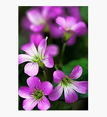 -Pretty in Pink Photographic Print