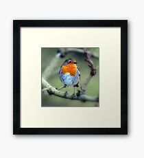Is it Christmas yet? Framed Print