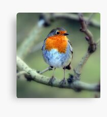 Is it Christmas yet? Canvas Print