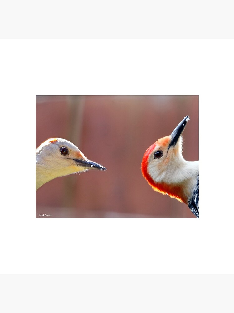 Femal and Male Red-Bellied Woodpeckers by mark-bugs-org