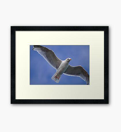 High Flier Framed Print