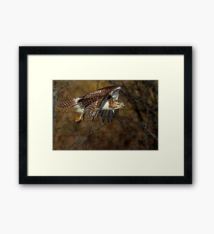 Red-tailed Hawk - Bullet Framed Print