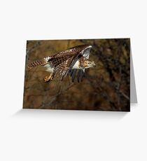 Red-tailed Hawk - Bullet Greeting Card