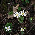 Wildflowers White by Eric Weiand