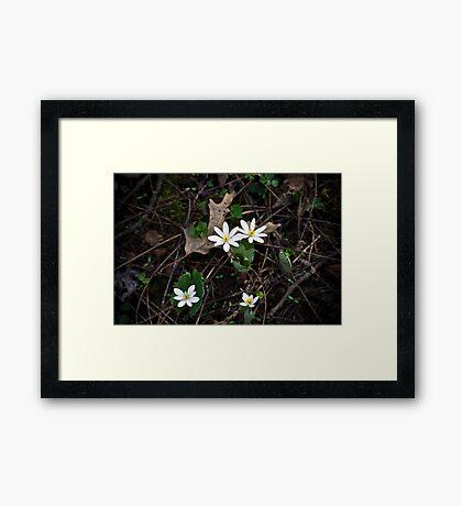 Wildflowers White Framed Print