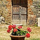 Barn and flowers by Philip Teale