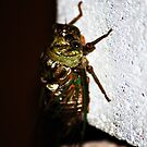 Cicada  by Taylor Russell