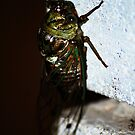 Cicada 2 by Taylor Russell