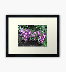 Gardens of the World - Orchids IV Framed Print