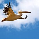 White Pelican by Linda Sparks