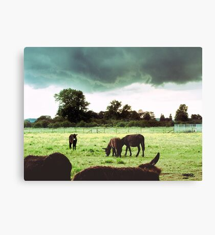 Self-Appointed Inspector of Donkeys and Rain Storms Canvas Print