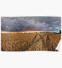 Panoramic Sunset Over Fields Poster