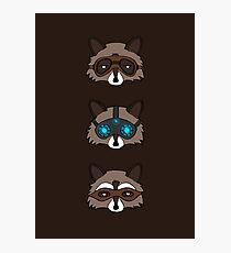 Raccoons Photographic Print