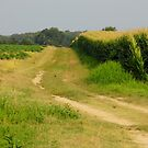 Country  Fields by WildestArt