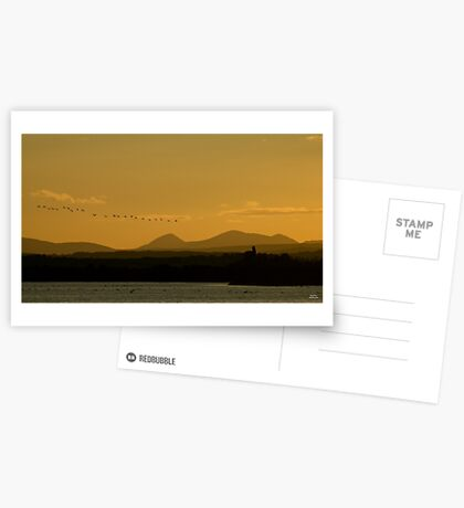 Geese over Derryveagh mountains at Twilight Greeting Card