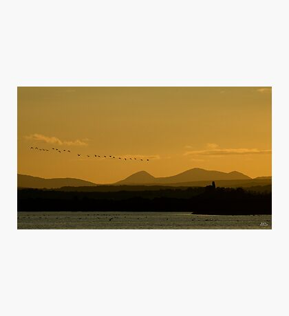 Geese over Derryveagh mountains at Twilight Photographic Print