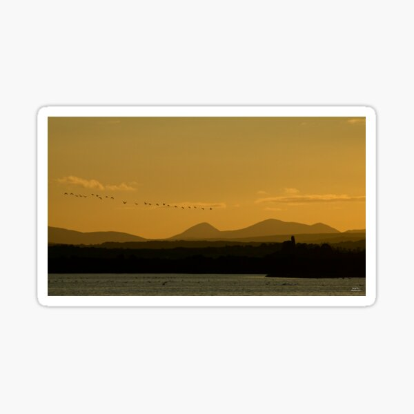 Geese over Derryveagh mountains at Twilight Sticker
