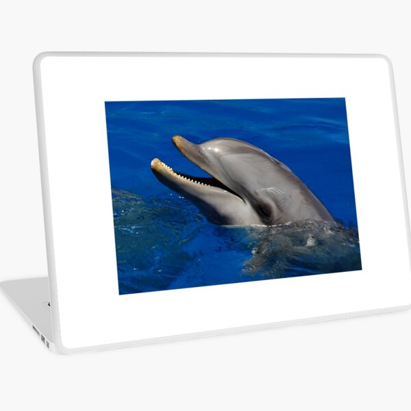 Dolphins Laptop Skin