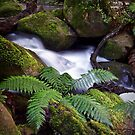 The Meeting of the Waters - Marysville, Victoria, Australia by Sean Farrow