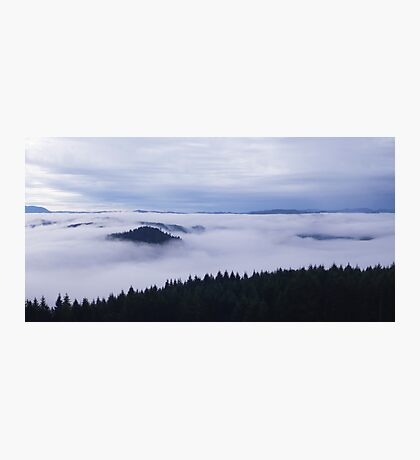 Spooky Forest Photographic Print