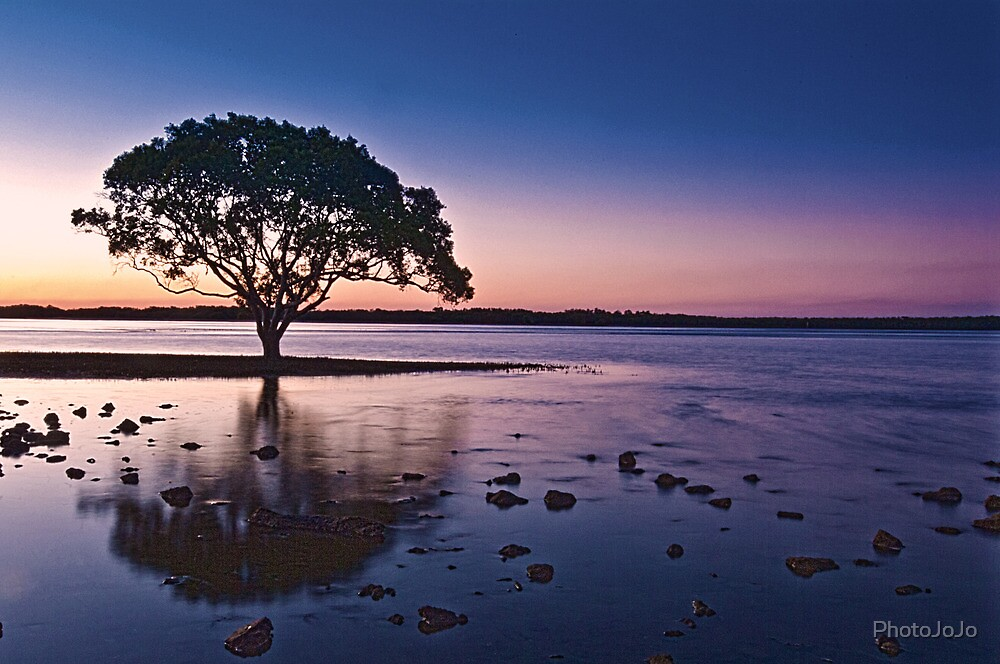 Lone Tree Brighton Park Brisbane Australia by PhotoJoJo