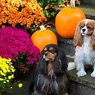 Cavalier King Charles Spaniel Autumn Buddies by daphsam