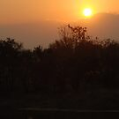 South African Sunset by gogston