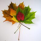 Autumn falls by Lisa Brower