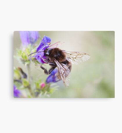 Bumbling Bee Canvas Print