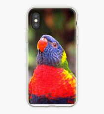 Lorikeet anstarren iPhone-Hülle & Cover