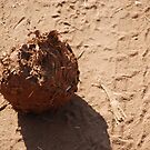 Elephant dung by gogston