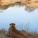 Lion overlooking waterhole by gogston