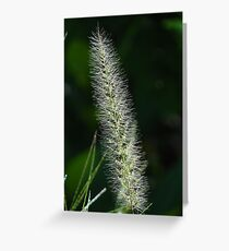 Flower Of Grass - Flor De Hierba Greeting Card