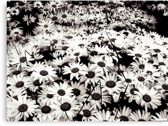 Flowers at Night by Brenda Dahl