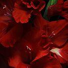 Red Gladiolas... by EbyArts