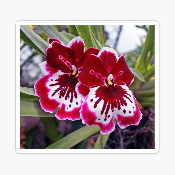 Orchids 2 Sticker