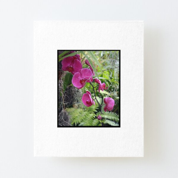 Orchids 5 Canvas Mounted Print