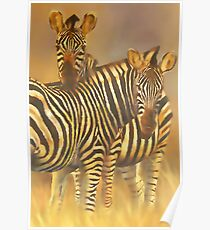 Common or Plains Zebra (Equus burchelli) Poster