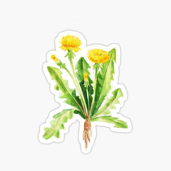 Watercolor dandelion flower Sticker